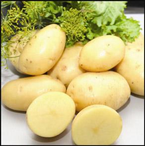 Семенной картофель Альмера