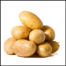 Сорт картофеля Гермес