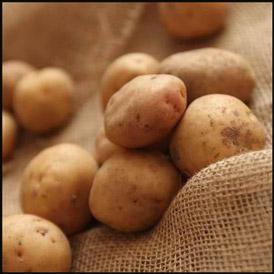 Сорт картофеля Салин