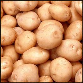 Сорт картофеля Санте