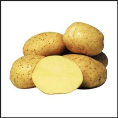 Семенной картофель Винета